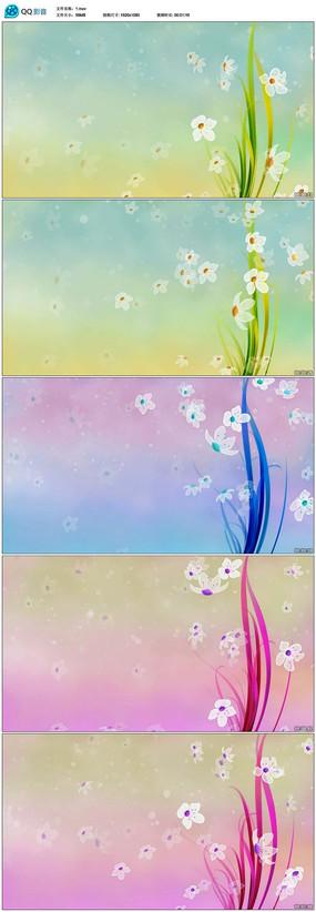唯美清新花朵小花视频