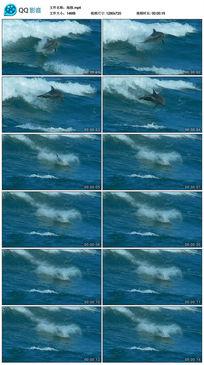 单海豚跳跃视频素材