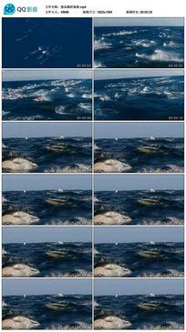 极品跳跃海豚视频素材