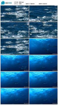 一群跳跃的海豚视频素材