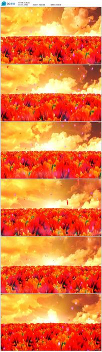美丽花开风景动态视频素材