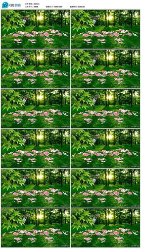 自然风景花草