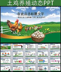 绿色生态鸡养殖ppt动态模板