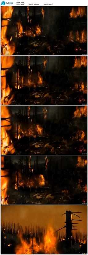 森林火灾视频