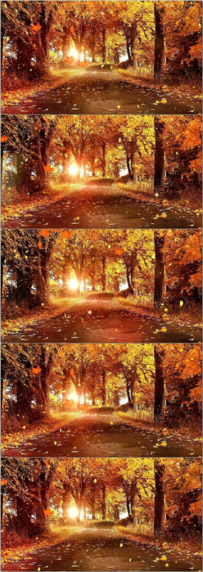 秋天落叶风景