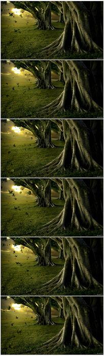 梦幻森林落叶飞舞视频