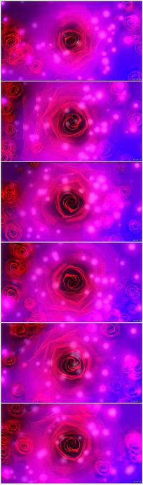 红色玫瑰花视频