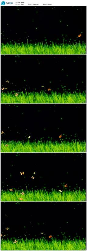 夜色星空下春天气息蝴蝶飞舞视频素材