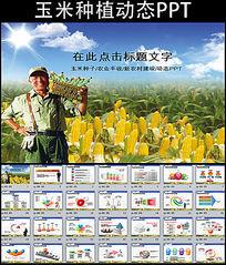 农业玉米种子新农村动态PPT模板