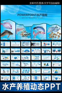 渔业水产海鲜渔业开发淡水水产养殖PPT模板