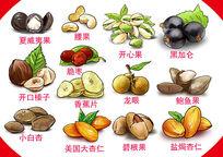 原创手绘干果商业食品插画