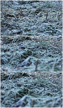 冬天霜冻绿草视频素材