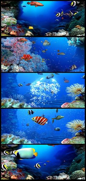 海底世界海鱼
