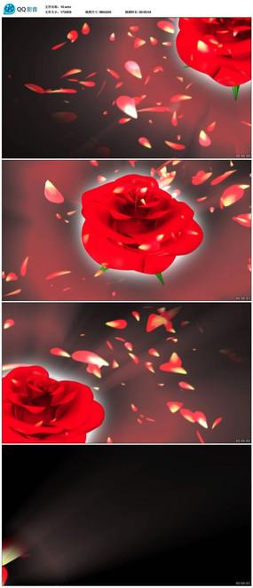 红色玫瑰花视频素材
