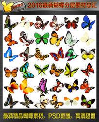蝴蝶抠图素材