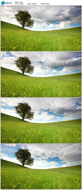 自然花草风景风光