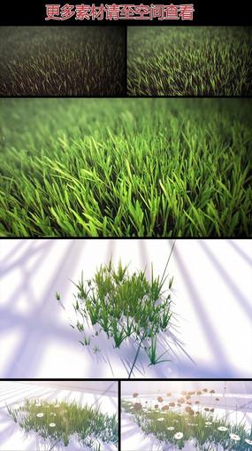 小草生长过程