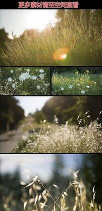 阳光下唯美草丛实拍视频素材