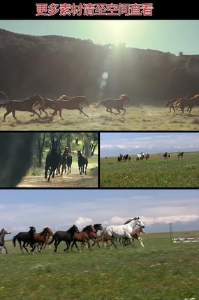 草原奔跑的马群实拍视频素材