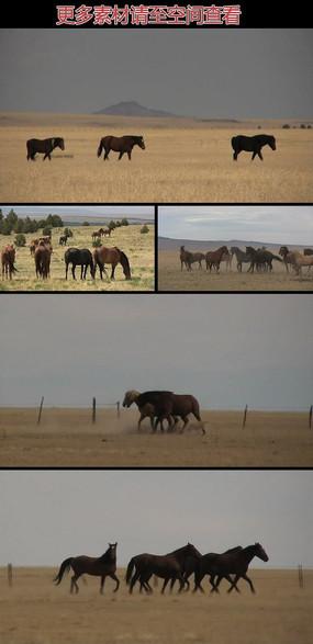 草原上的马群实拍视频素材