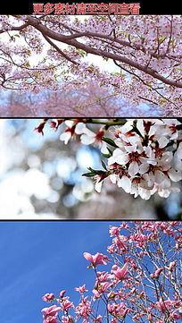 枝头桃花樱花红花高清实拍视频素材