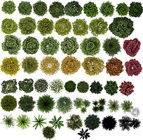 PS真实植物品种平面素材PSD