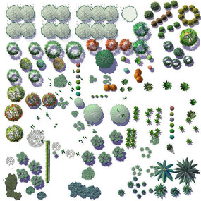 PS植物素材乔木平面PSD