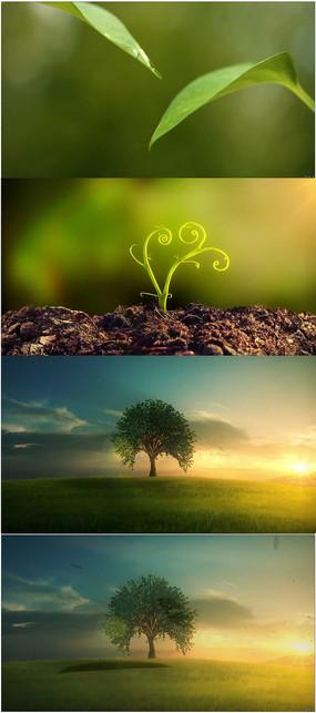 植物生长视频