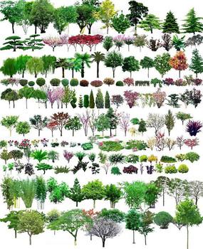 PS植物素材