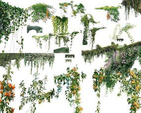 绿色水生植物