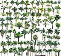 海边植物PS立面素材