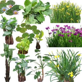 热带植物花卉