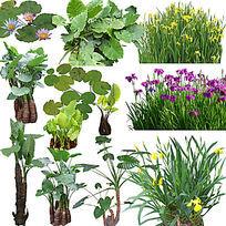 喜水植物PS素材