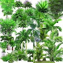 棕榈树PS素材立面效果图