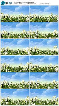 春天百合花鲜花花海民歌舞台背景