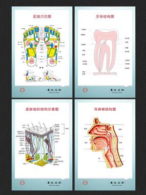 医疗解剖图