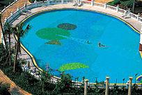 圆形图案游泳池效果图