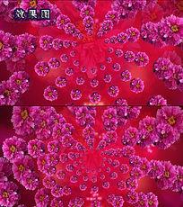 节日唯美富贵红牡丹花开视频背景
