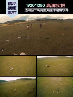 航拍草原骑马人视频素材