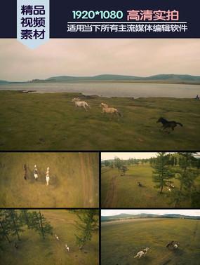 马群蒙古草原奔跑实拍素材