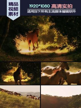 野马群奔实拍视频素材