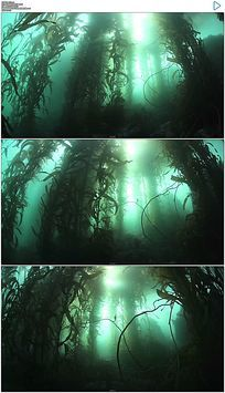 迷幻神秘的藻类场景视频素材
