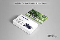 水果葡萄采摘名片设计