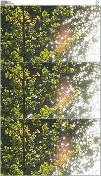 波光粼粼的水面和树叶实拍视频素材