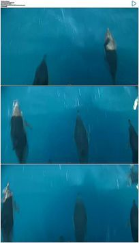 跳跃前进的海豚实拍视频素材