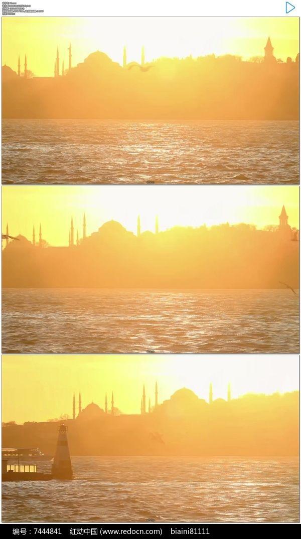 伊斯坦布尔海鸥飞行实拍视频素材图片