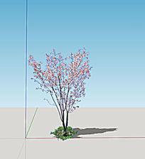 sketchup模型树2d真实玉兰