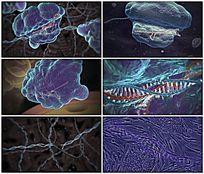 基因DNA重组医疗演示视频