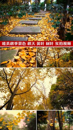 秋天落葉特寫