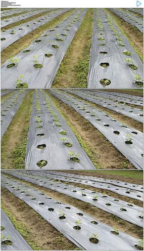 农业薄膜实拍视频素材
